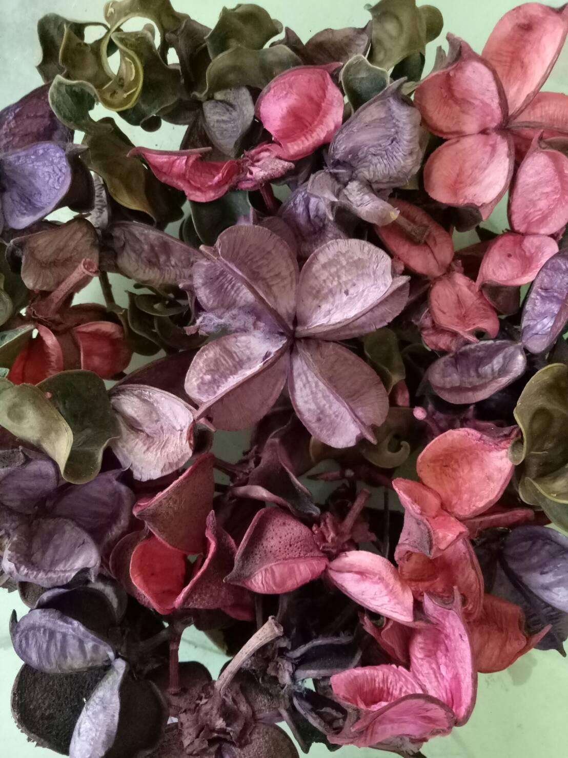 521330801 Lavender Image
